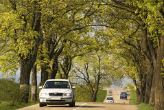 Traffic car road. Spring traffic, car on road with trees too close Stock Image
