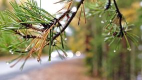 Traffic at forest road in rainy autumn stock footage
