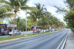 Traffic island of coconuts Stock Images