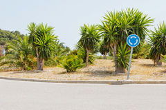 Traffic circle with palms Royalty Free Stock Images