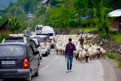 Traffic jam in Kashmir due to Sheep movement Stock Images