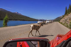 Traffic jam at Medicine Lake royalty free stock images