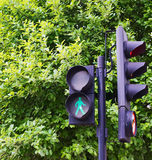 Traffic light against the green tree background Stock Photo