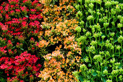 Traffic light colours from plants Royalty Free Stock Image