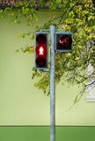 Traffic light on pedestrian crossing. Counter is counting for duration of red light. Waiting to start green light. Traffic light on pedestrian crossing. Counter stock photo