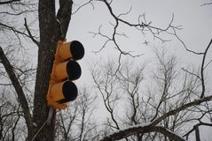 Traffic Light on Tree Under Winter Sky stock image