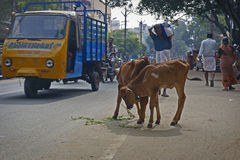 Traffic in Madurai Stock Images