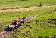 Traffic in mountainous rural area in summer. Pylypets, Ukraine - May 01, 2017: traffic in mountainous rural area in summer. wooden cart with two horses and two Royalty Free Stock Photo