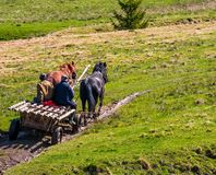 Traffic in mountainous rural area in summer. Pylypets, Ukraine - May 01, 2017: traffic in mountainous rural area in summer. wooden cart with two horses and two Stock Image