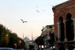 Golden Horn. Traffic, Seagulls and Mosque at Golden Horn, Istanbul, Turkey royalty free stock photography