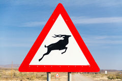 Traffic Sign: Caution Springbok crossing road Royalty Free Stock Photo