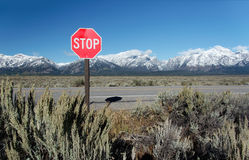 Traffic Sign in Grand Teton National Park. Traffic Sign Stop with mountains at Grand Teton National Park, Wyoming, USA Stock Photography