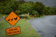Traffic sign for Slow down duck crossing. Traffic sign for Slow down duck crossing stock images