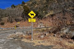 Traffic sign warning of cattle on the road Royalty Free Stock Images