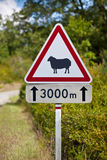 Traffic sign warning of sheep on the road Stock Photo