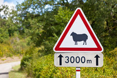 Traffic sign warning of sheep on the road. Triangular traffic sign warning of sheep on the road on a rural road background Royalty Free Stock Image