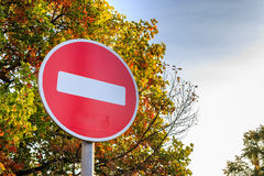 Traffic stop sign on yellowed tree. Royalty Free Stock Image