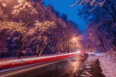 Traffic through trees Royalty Free Stock Photo
