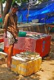 Traficante de peixes que vende a captura do dia no forte Cochin Fotos de Stock Royalty Free