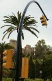 Trafikljus och palmträd Arkivfoto