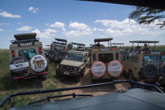 Trafikstockning: Folkmassa av safariturister som söker efter djurliv Royaltyfri Bild