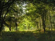 Traforo dagli alberi Immagine Stock Libera da Diritti