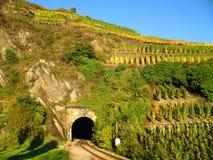 Traforo di ferrovia in iarda del vino Fotografie Stock