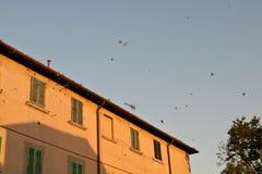 Traga quién van a dormir en los tejados en la puesta del sol, Bolgheri Toscana foto de archivo libre de regalías