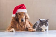 Tragen eines Weihnachtshutes der Hunde und der Katzen lizenzfreie stockbilder