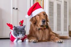 Tragen eines Weihnachtshutes der Hunde und der Katzen stockbilder