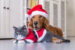 Tragen eines Weihnachtshutes der Hunde und der Katzen stockfoto