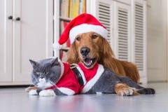 Tragen eines Weihnachtshutes der Hunde und der Katzen stockbild