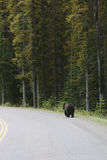 Tragen Sie, an der Seite der Straße in Banff zu gehen Lizenzfreies Stockbild