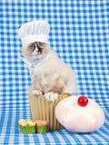 Tragende Chefausstattung des Ragdoll Kätzchens Stockfotos