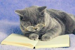 Tragende Gläser der Katze, die ein Buch lesen Lizenzfreie Stockfotos