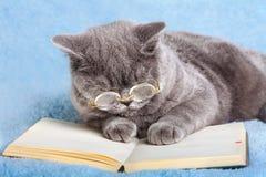 Tragende Gläser der Katze, die Notizbuch lesen Stockfoto