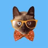Tragende Gläser der realistischen Katze, mit einem Bogen Stockbild