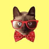 Tragende Gläser der realistischen Katze, mit einem Bogen Lizenzfreies Stockfoto