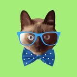 Tragende Gläser der realistischen Katze, mit einem Bogen Lizenzfreies Stockbild
