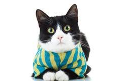 Tragende Kleidung der Schwarzweiss-Katze Stockbilder