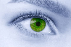Tragende Kontaktlinsen des grünen weiblichen Auges auf blauem getontem Gesicht Stockfotos
