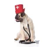 Tragende Krankenschwestern medizinischer Hut und Stethoskop des Pughündchens Lokalisiert auf Weiß Stockfoto