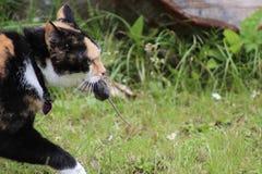 Tragende Maus der Katze Stockfoto