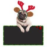 Tragende Rengeweihe des entzückenden Pughündchens für Weihnachten, lehnend auf leerem Zeichen, auf weißem Hintergrund lizenzfreie stockfotos