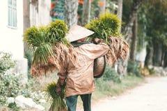 Tragende Sämlinge des vietnamesischen Landwirts des Reises Lizenzfreies Stockbild