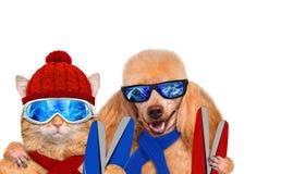 Tragende Skischutzbrillen der Katze und des Hundes, die im Berg sich entspannen Stockfotografie