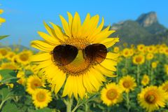Tragende Sonnenbrille Smiley Sunflowers Stockfoto