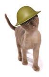 Tragender Armeesturzhelm des Kätzchens Stockfotos
