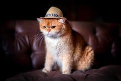 Tragender Hut der orange Katze auf Sofa Lizenzfreie Stockbilder