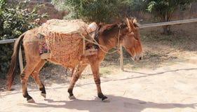 Tragender Sand des armen Esels in Rajasthan Lizenzfreie Stockbilder